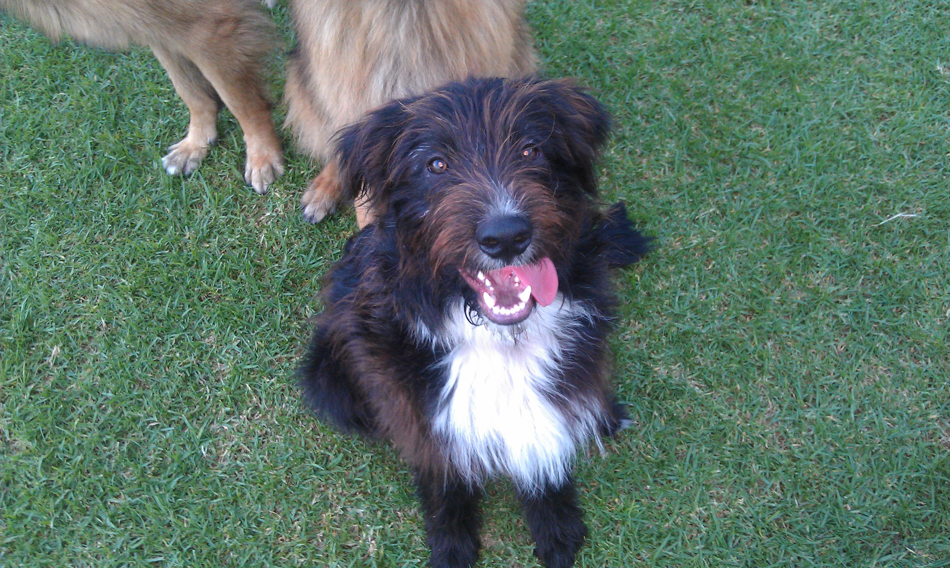 Smithfield Dog Rescue